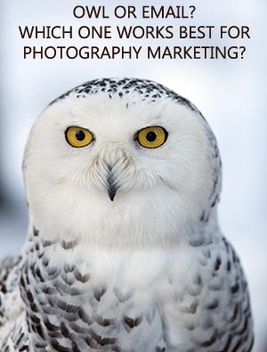 An owl or an email marketing campaign? Which one works best for photography marketing?