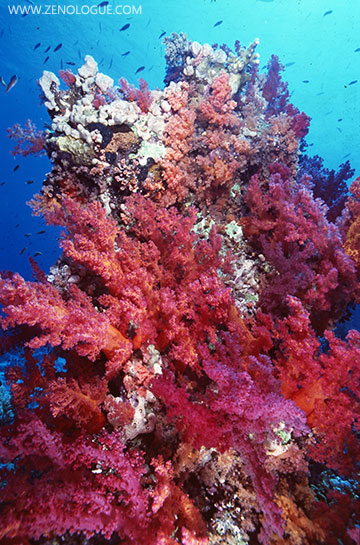A beautiful reef scene from the Egyptian Red Sea