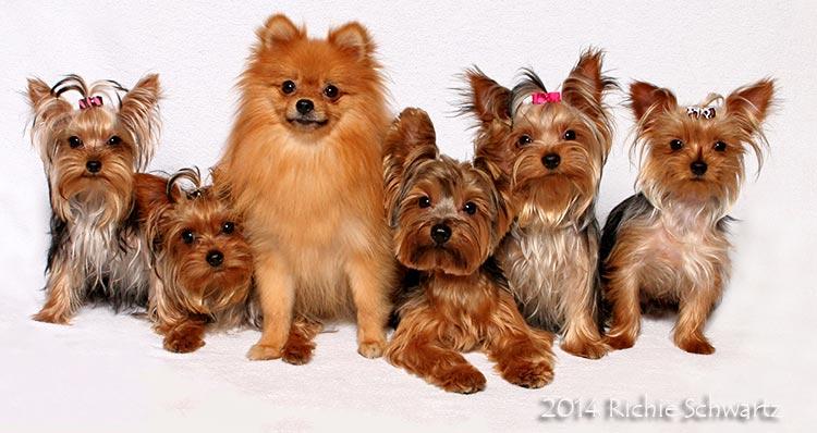 Photography by pet photographer Richie Schwartz