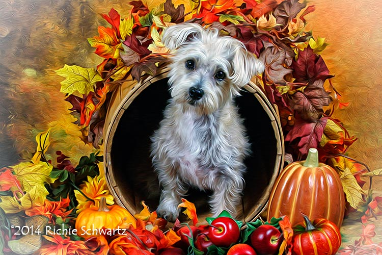 Photography by pet photographer Richie Schwartz